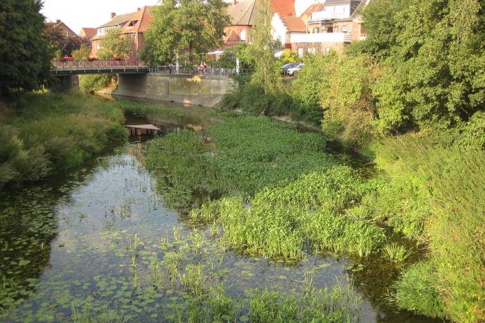 Die Werse in Albersloh: Durch den hohen Nährstoffgehalt im Wasser wachsen viele Pflanzen im Fluss.